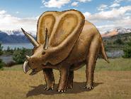 Dm torosaurus