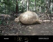 Glyptodon-738x591