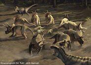 Triceratops Herd