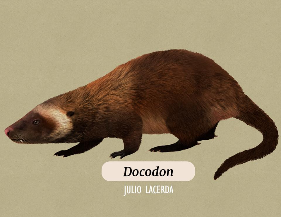 Docodon