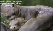 Zoboomafoo Giant Otters