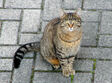 Cat (Animals)