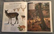 DK Encyclopedia Of Animals (67)