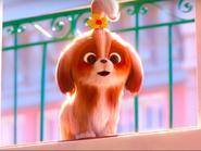 Daisy in Secret Life of Pets 2