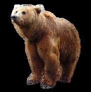 NatureRules1 Grizzly Bear (V2)