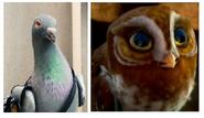 Pidgeonand Owl