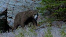 BBC.Prehistoric.Park.2of6.A.Mammoth.Undertaking.XviD.AC3.6ch.MVGForum.avi snapshot 08.10 -2016.09.02 19.01.34-.jpg