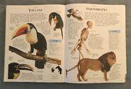 DK Encyclopedia Of Animals (162)