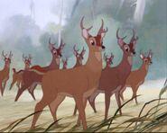 Deers (Bambi)