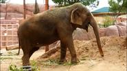 El Paso Zoo Elephant