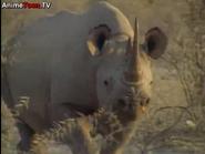 TASwSaJ Black Rhino