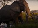 TLK 2019 Elephant