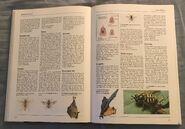 The Kingfisher Illustrated Encyclopedia of Animals (74)