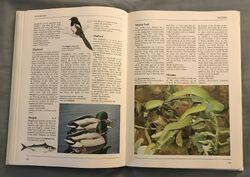 The Kingfisher Illustrated Encyclopedia of Animals (93).jpeg