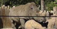 Utah Hoogle Zoo Rhino