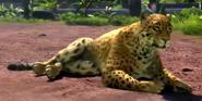 Amazon-jaguar-zootycoon3