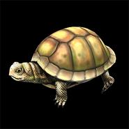 AoE2 DE box turtles icon