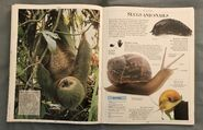 DK Encyclopedia Of Animals (151)