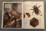 DK Encyclopedia Of Animals (45)