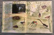 Macmillan Animal Encyclopedia for Children (10)