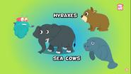 Manatees Hyraxes and Elephants