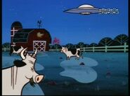 PPG Cows