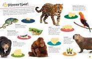 Chameleons Frogs Bears Birds Jaguars Orangutans Capybaras