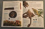DK Encyclopedia Of Animals (57)