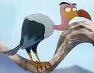 Male Vulture