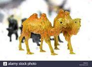 Noah's Ark Bactrian Camels