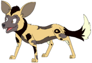 Pete the African Wild Dog