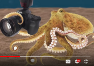 SML Octopus