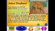 BTKB Asian Elephant