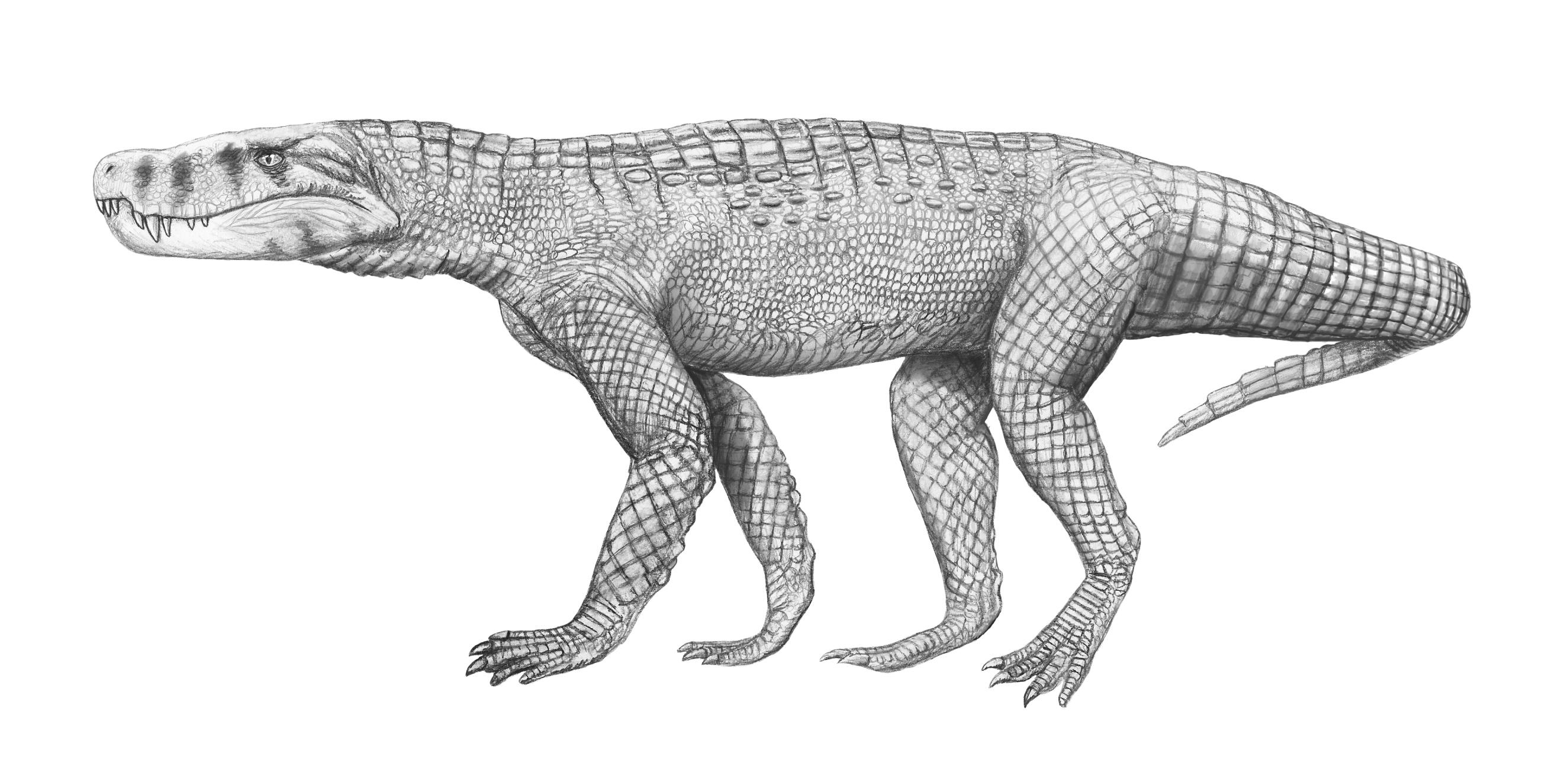 Baurusuchus