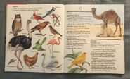 My First Book of Animals from A to Z (3)