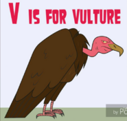 Total Drama Vulture
