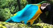 Blue-and-yellow-macaw-zootycoon3