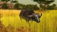 Cabela's Buffalo