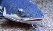 Catfish in arizona's wildlife world zoo