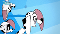 Dolly and dalmatian siblings