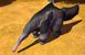 Giant Anteater IC