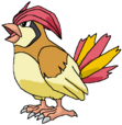 Pidgeotto rosemaryhillspokemonadventures
