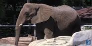 Rodger Williams Park Zoo Elephant