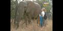 Scout's Safari Elephant
