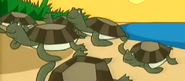 Stanley Sea Turtles