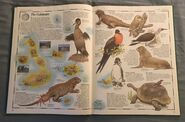 The Animal Atlas (7)