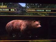 The kodiak bear by darcygagnon-d8dq23z