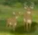 AMC Theaters Deer