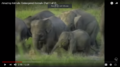 Animal As Big As an Elephant, A Rhinoceros, Or A Whale