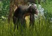 Bonobo-planet-zoo
